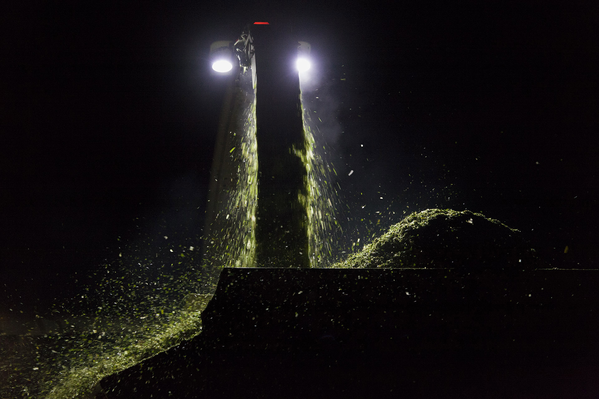 Høst af majs i kunstig belysning.